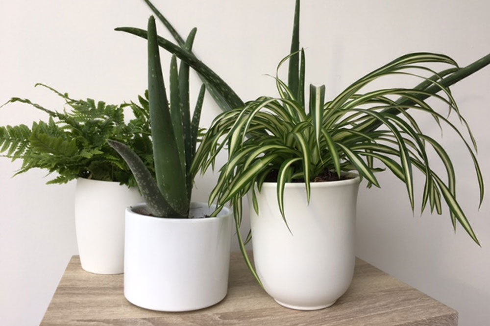 The Health Benefits of Houseplants